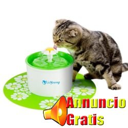 gattinofontana